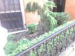 Garden long view.